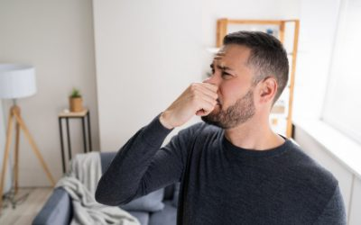 What Is the Best Way to Get Rid of a Damp Smell?